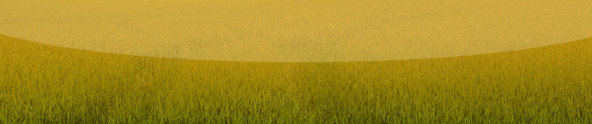 grass-background3